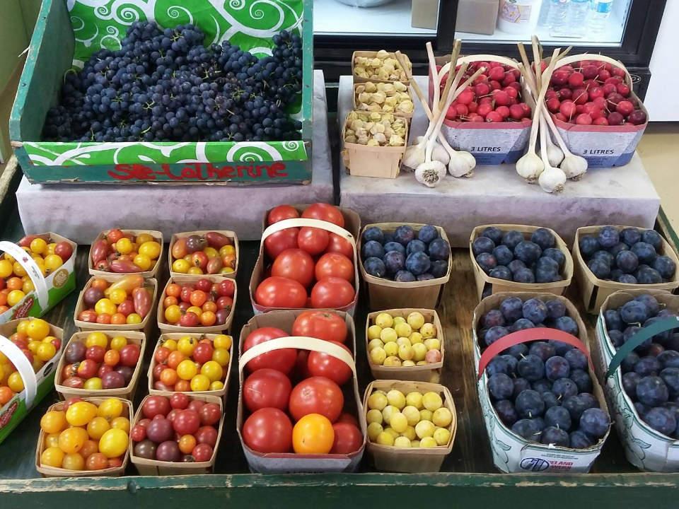 marché de fruits et/ou légumes paniers de légumes et fruits ail bleuets tomates prunes cerises ferme ste-catherine sherbrooke québec canada ulocal produits locaux achat local produits du terroir locavore touriste