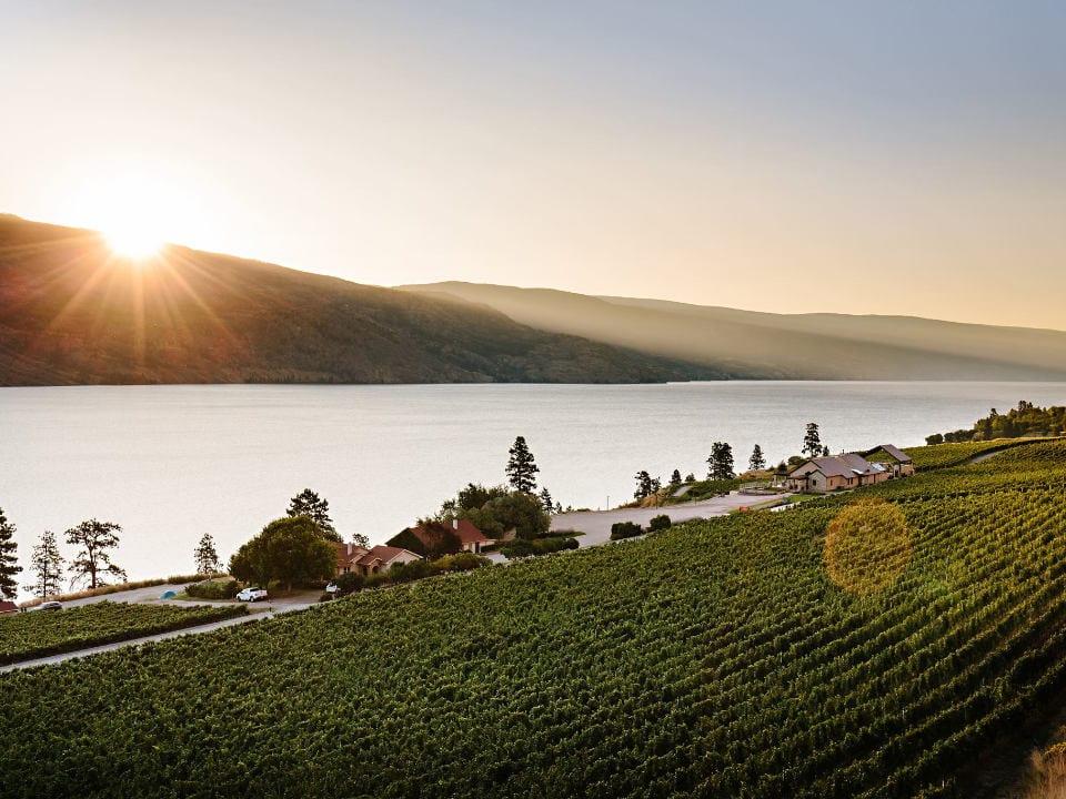 vignoble belle vue du vignoble et du lac fitzpatrick family vineyards peachland colombie britannique canada ulocal produits locaux achat local produits du terroir locavore touriste