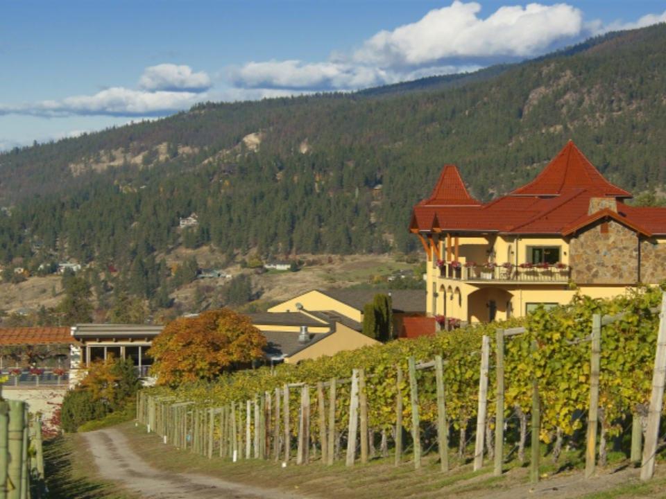 vignoble vue de la propriété du vignoble et de la montagne gray monk estate winery lake country colombie britannique canada ulocal produits locaux achat local produits du terroir locavore touriste