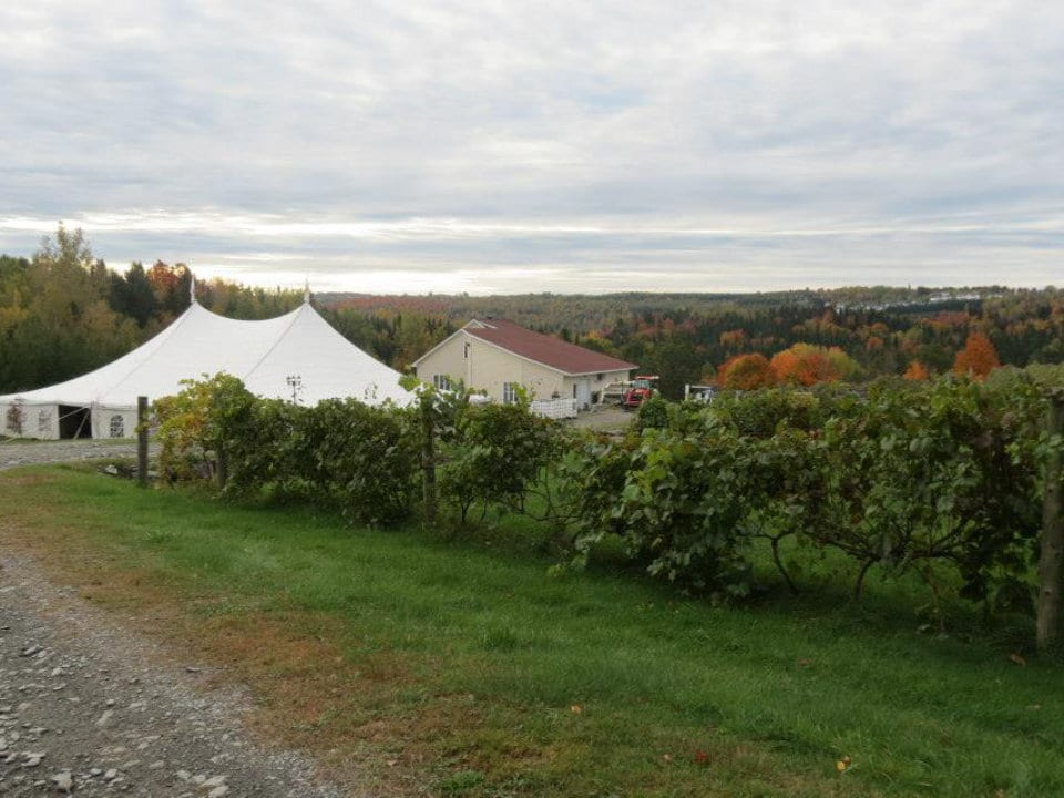 vineyard vineyard marquee and winery la halte des pèlerins sherbrooke quebec canada ulocal local products local purchase local produce locavore tourist