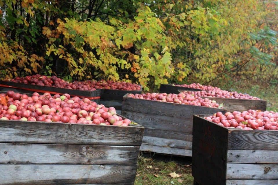 Fromage boutique verger pommes bio Les Fromages du verger Saint-Joseph-du-Lac Québec ulocal produit local achat local produit du terroir