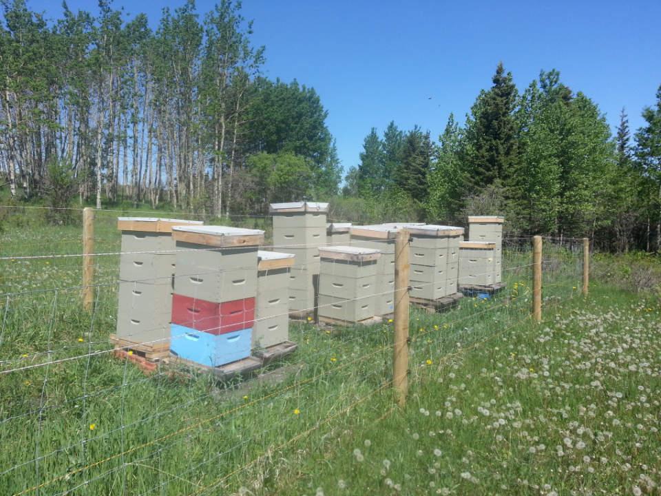 vignoble élevage et maison d'abeilles spirit hills honey winery millarville alberta canada ulocal produits locaux achat local produits du terroir locavore touriste