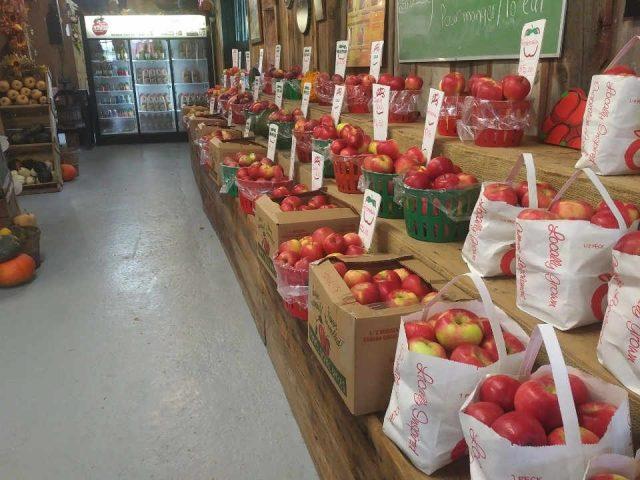 Vergers autocueillette pomme poire citrouille Vergers Petch Orchards Hemmingford Québec ulocal produit local achat local