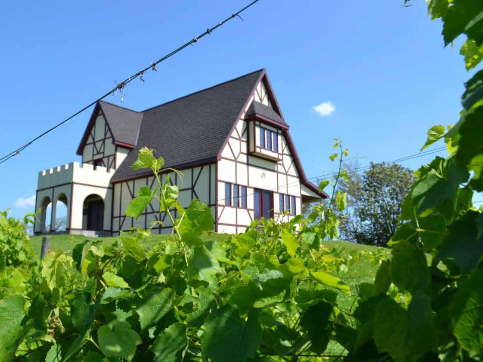 Vignoble alcool alimentation Vignoble Clos Lambert Saint-Jean-Chrysostome Québec Ulocal produit local achat local produit du terroir