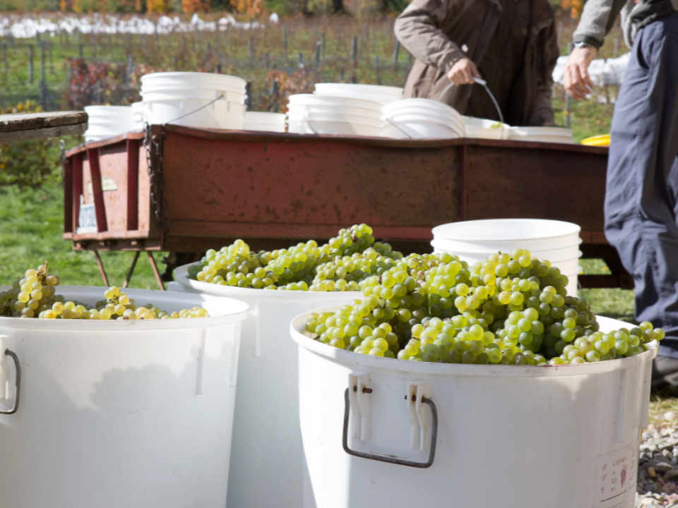 Vineyard Liquor Supply Vignoble Clos Lambert Saint-Jean-Chrysostome Quebec Ulocal Local Product Local Purchase Local Product