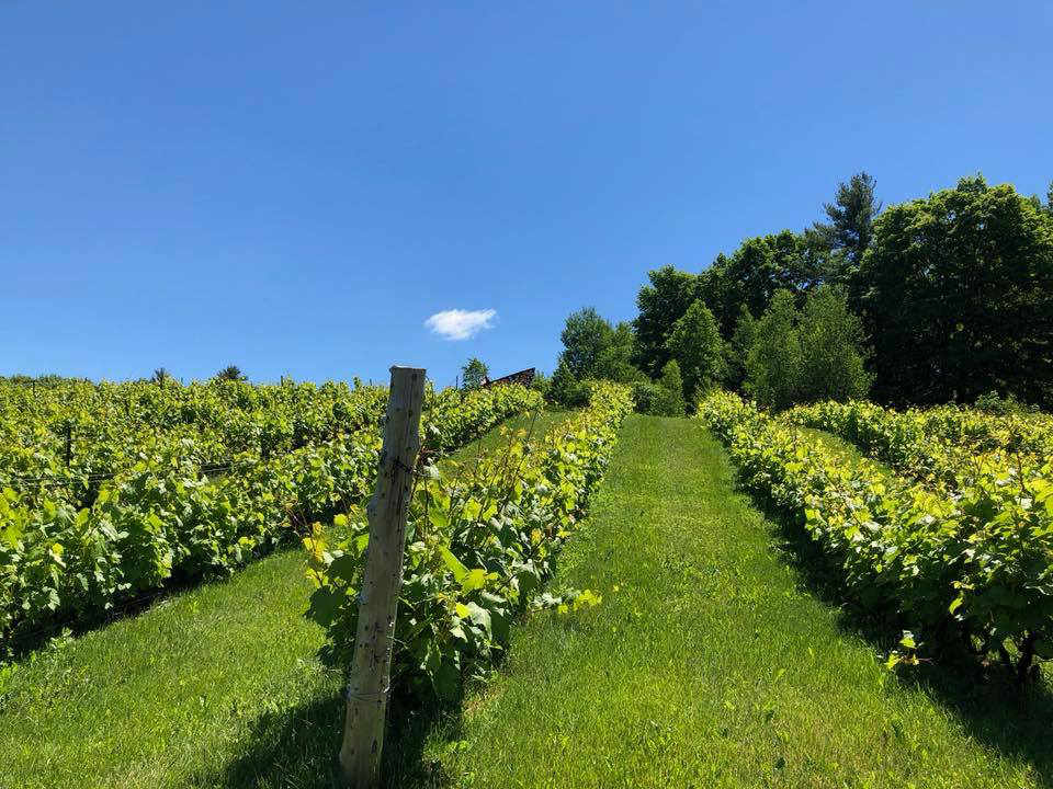 Wine Vineyard alcohol Vineyard Domaine des Côtes d'Ardoise Dunham Quebec Ulocal local product local purchase local product