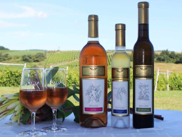 Vineyard alcohol food Vineyard Domaine l'Ange Gardien Quebec Ulocal local product local purchase local product