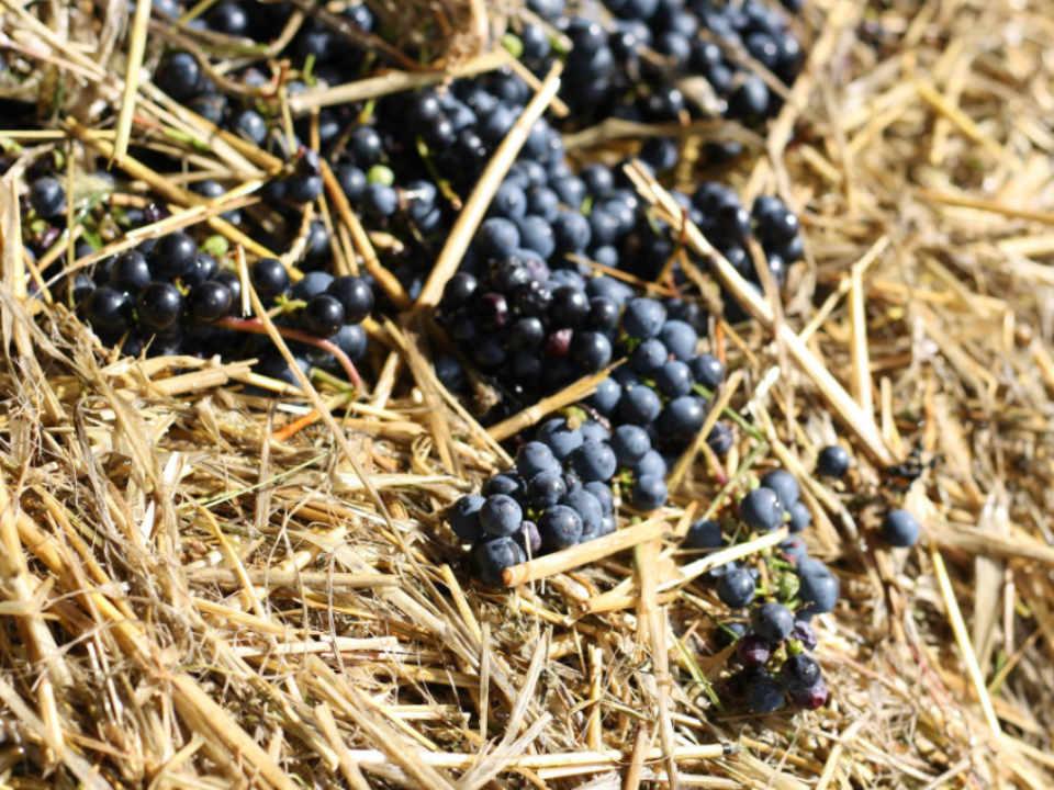 Vignoble alcool alimentation Vignoble du faubourg Saint-Jean-Port-Joli Québec Ulocal produit local achat local produit du terroir