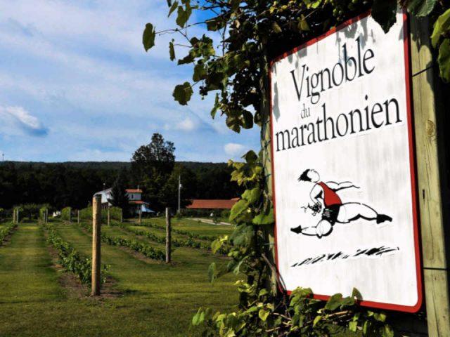 Vignoble alcool alimentation Vignoble du Marathonien Havelock Québec Ulocal produit local achat local produit du terroir