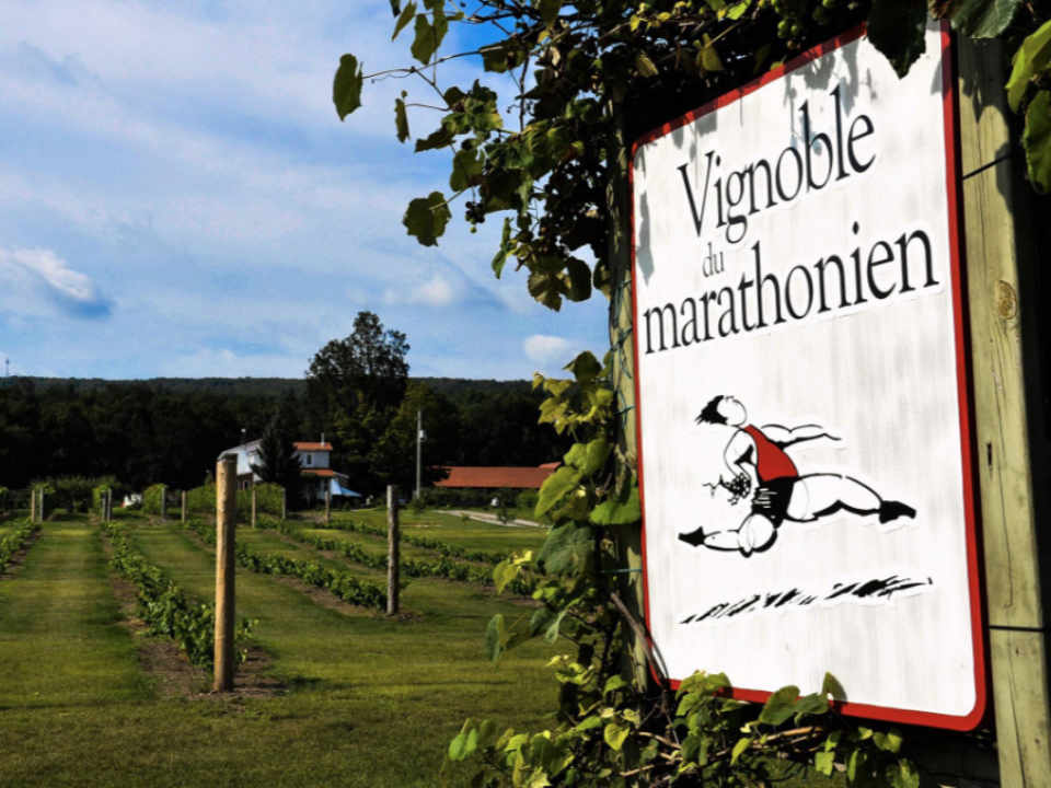 Vineyard Alcohol Food Havelock Marathoner's vineyard Quebec Ulocal local produce local purchase local produce