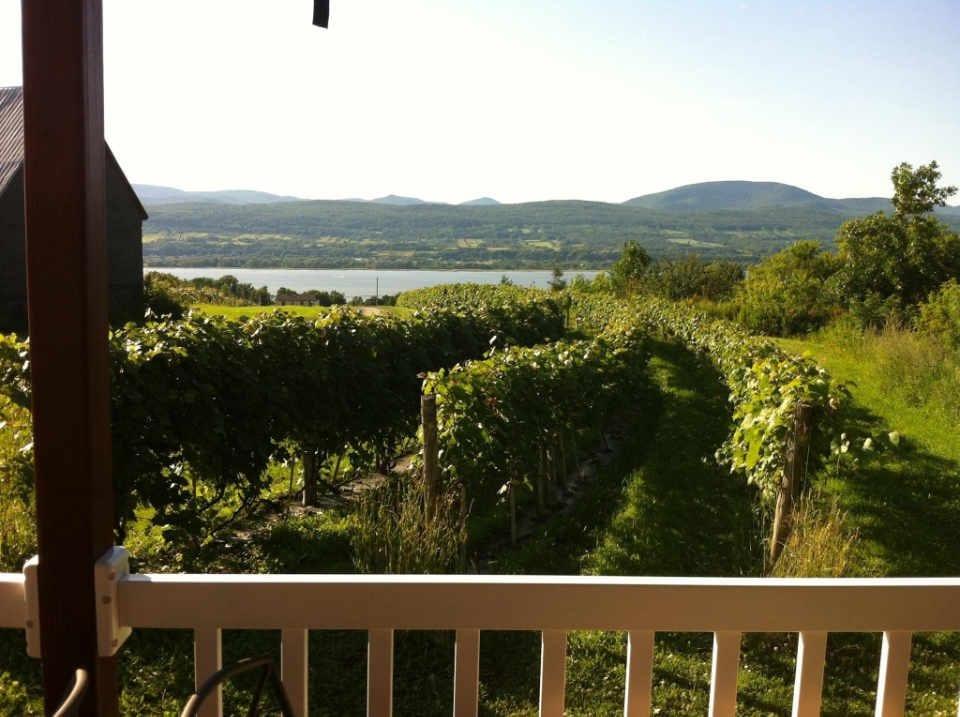 Vineyard alcohol Mitan Sainte-Famille Vineyard Quebec Ulocal local produce local purchase local produce