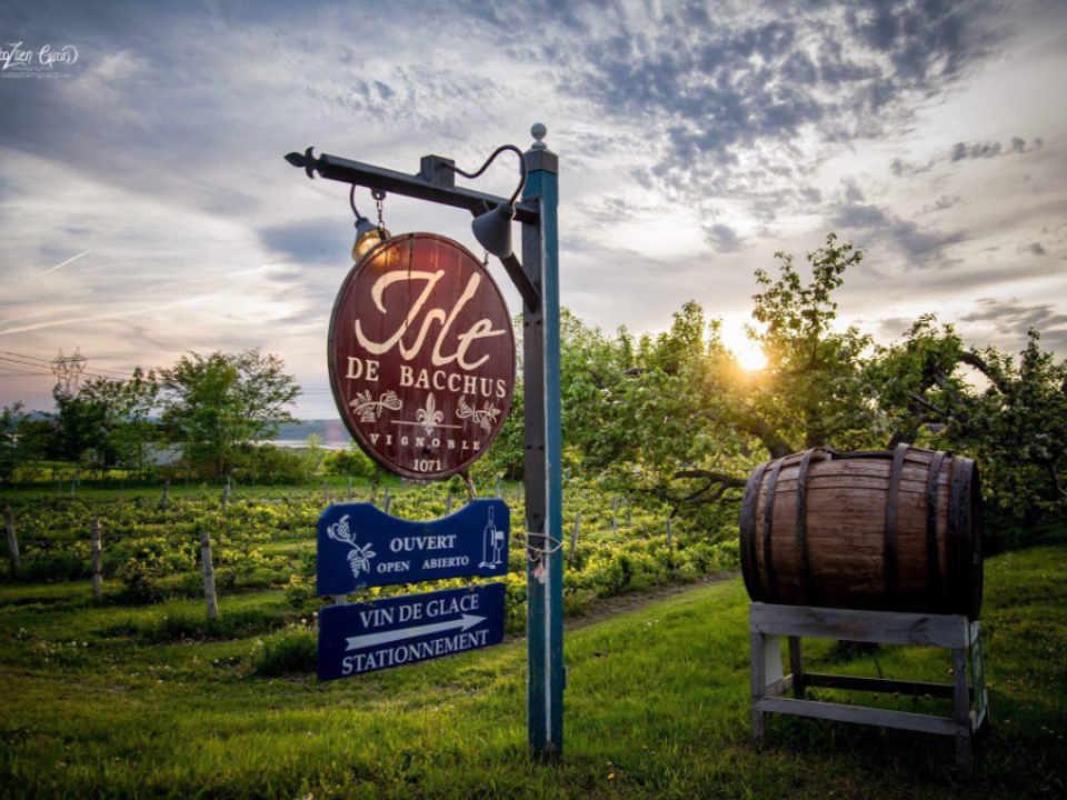 Vignoble alcool alimentation Vignoble Isle de Bacchus Saint-Pierre Québec Ulocal produit local achat local produit du terroir