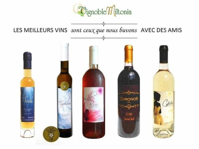Vineyard Alcohol Food Vineyard Miltonia Sainte-Cécile-de-Milton Quebec Ulocal Local Product Local Purchase Local Product