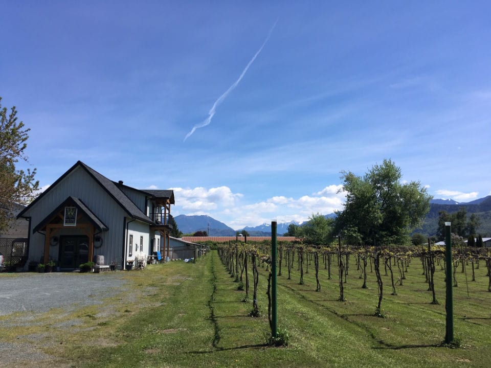 vineyard view of white and black farm and vineyard beautiful blue skywillow creek vineyard chilliwack british colombia canada ulocal local products local purchase local produce locavore tourist