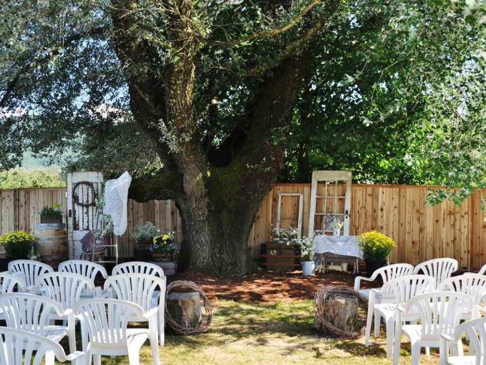 vineyard wedding tree with setup of chairs for ceremonywillow creek vineyard chilliwack british colombia canada ulocal local products local purchase local produce locavore tourist