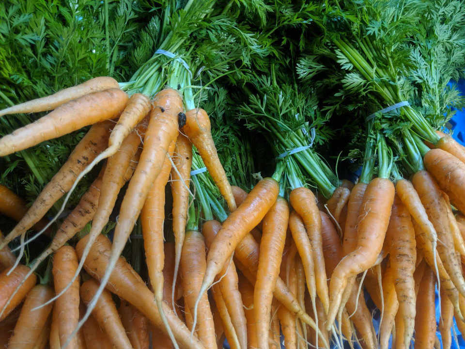 Produce market carrots Green Mountain Farm Girls Northfield Vermont United States Ulocal local product local purchase