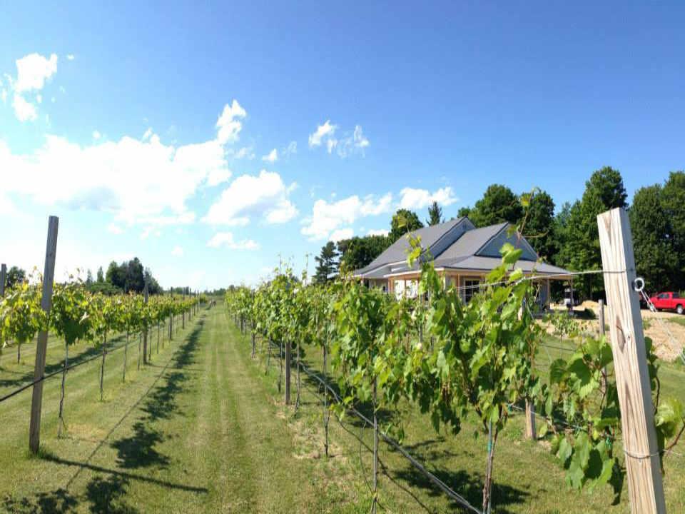 Vignoble vignoble Vesco Ridge Vineyards West Chazy New York États-Unis Ulocal produit local achat local
