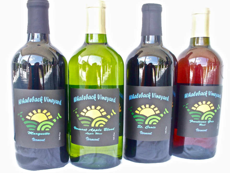 Vineyard wine bottles Whaleback Vineyard Poultney Vermont USA Ulocal Local Product Local Purchase
