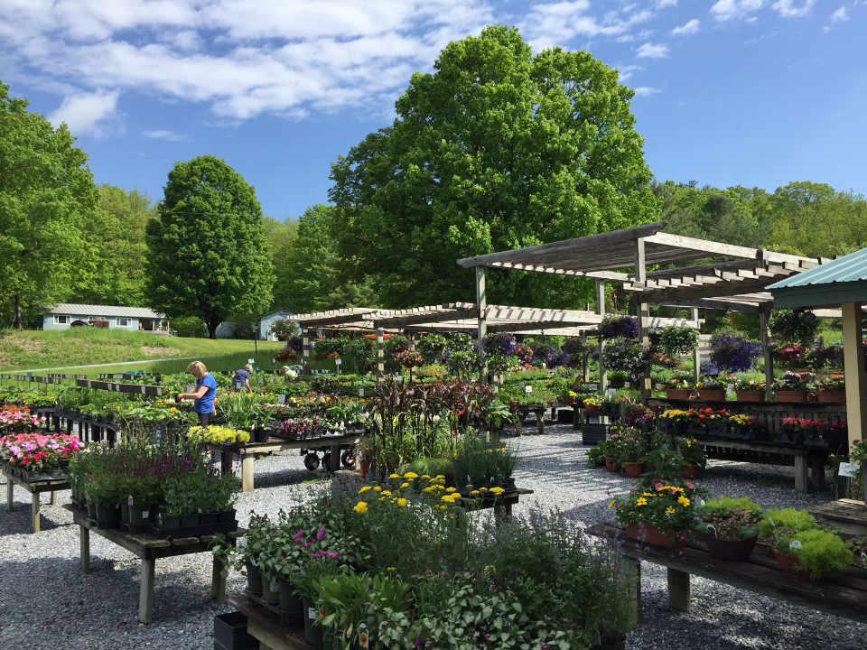 Marché de fruits et légumes plantes et fleurs Wood's Market Garden Brandon Vermont États-Unis Ulocal produit local achat local