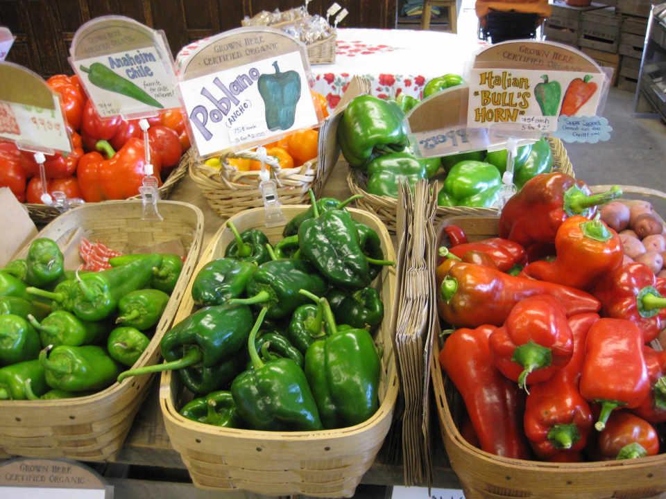 Marché de fruits et légumes poivrons Wood's Market Garden Brandon Vermont États-Unis Ulocal produit local achat local