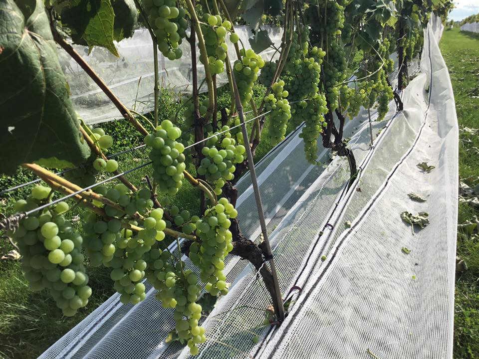 boutique aliments vignes de raisins verts au fil du vent saint-jacques-le-mineur québec canada ulocal produits locaux achat local produits du terroir locavore touriste