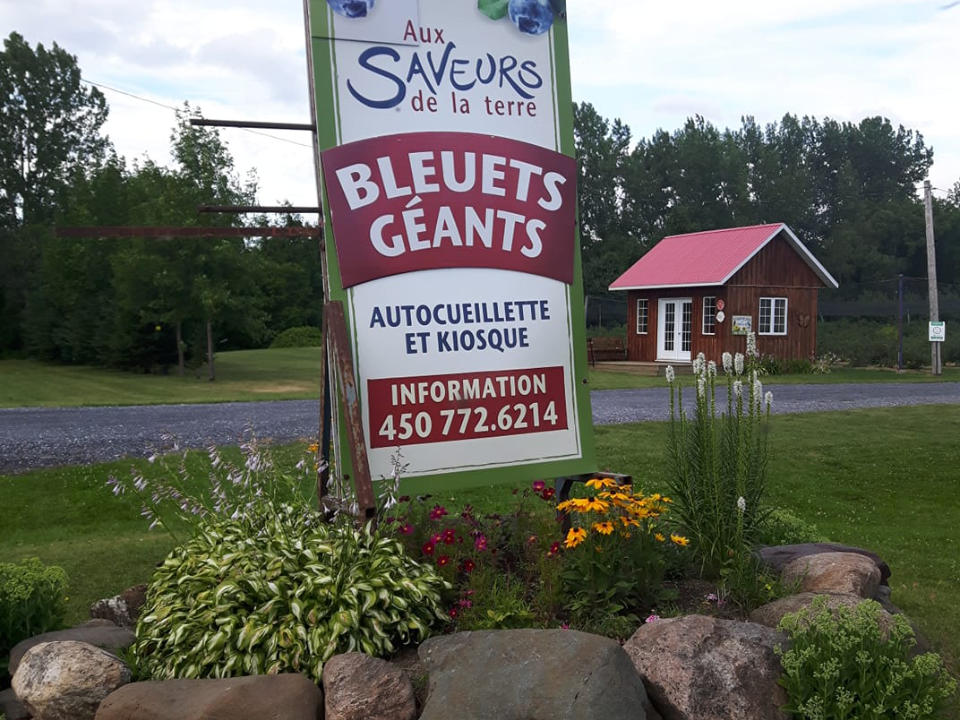 produce picking blueberry signboard with hut with red roof in the background aux saveurs de la terre saint-paul-d'abbotsford quebec canada ulocal local products local purchase local produce locavore tourist