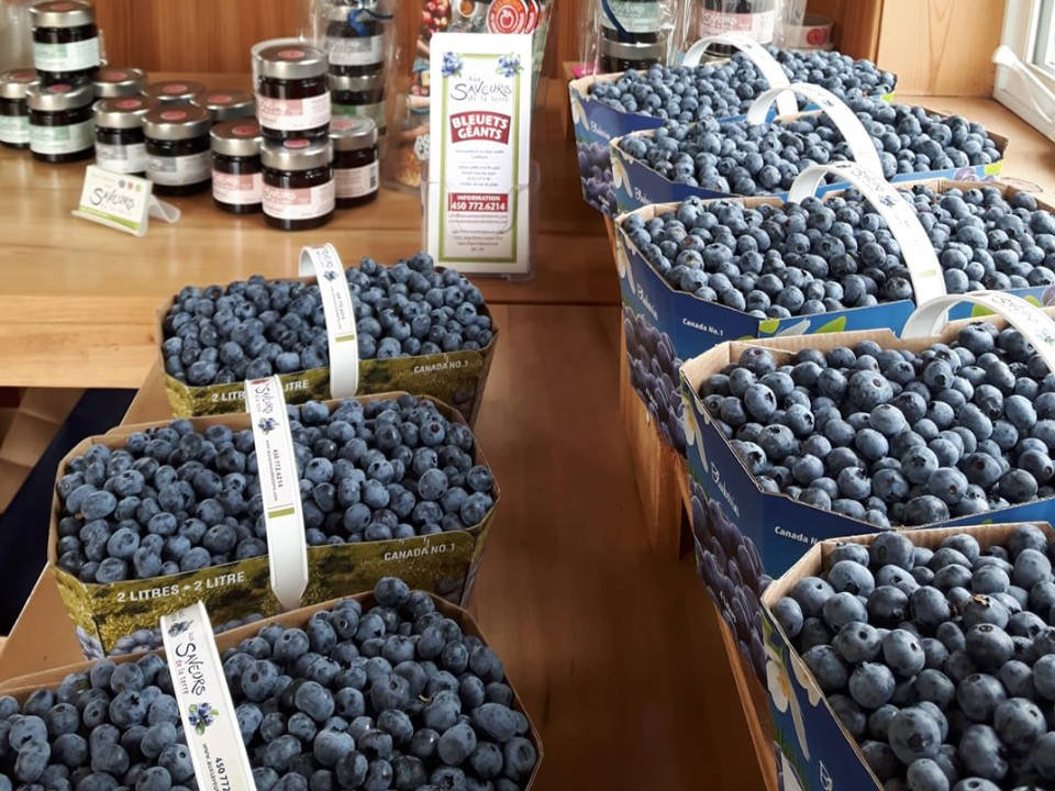 produce picking several sizes of baskets for picking blueberries and homemade jams on the table aux saveurs de la terre saint-paul-d'abbotsford quebec canada ulocal local products local purchase local produce locavore tourist
