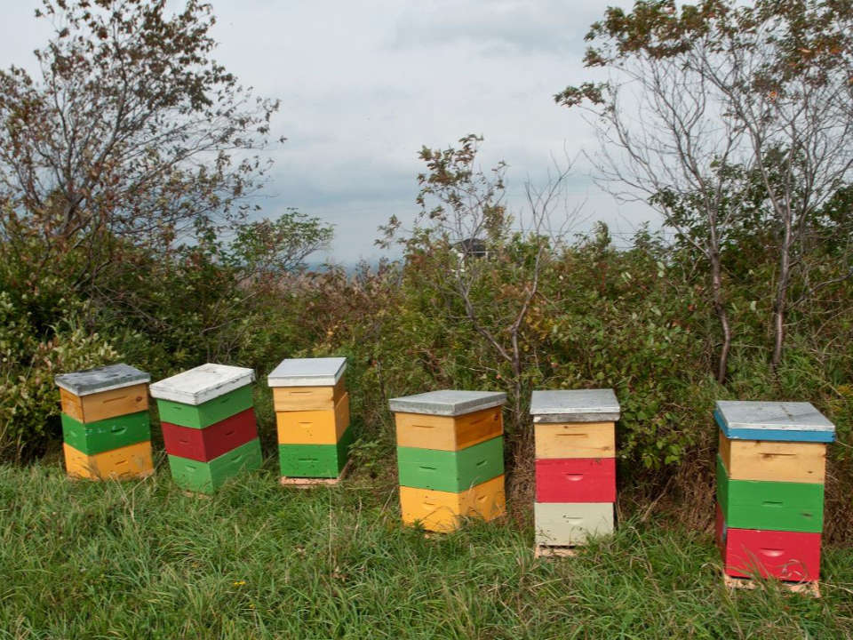 beekeeping yellow red green white color hives along the woodland hydromellerie saint paul de la croix saint-paul-de-la-croix quebec canada ulocal local products local purchase local produce locavore tourist