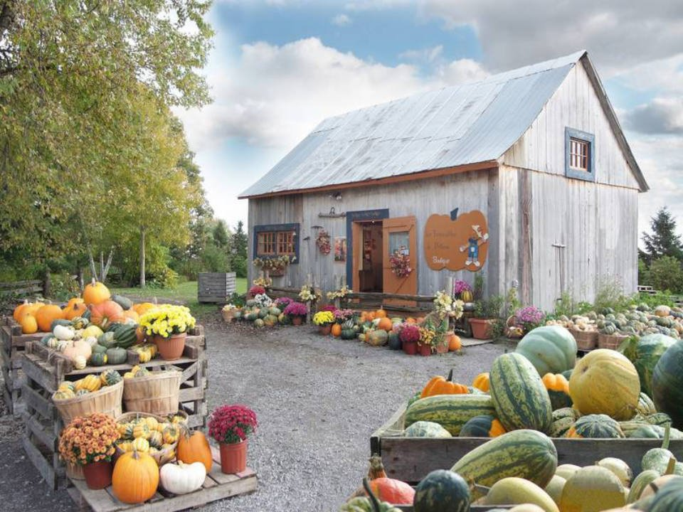 produce markets old wooden barn with many varieties of squash and view of the beautiful grounds la courgerie sainte-elisabeth quebec canada ulocal local products local purchase local produce locavore tourist