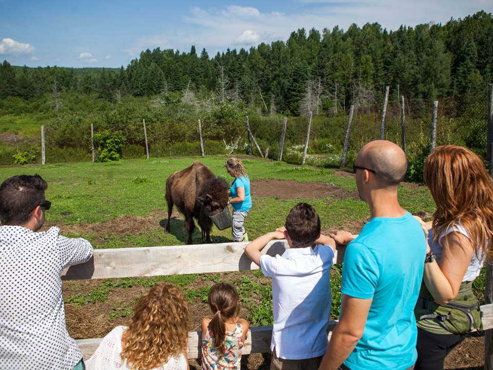 butcher shop families watching bison being fed by a farm worker la terre des bisons rawdon quebec canada ulocal local products local purchase local produce locavore tourist