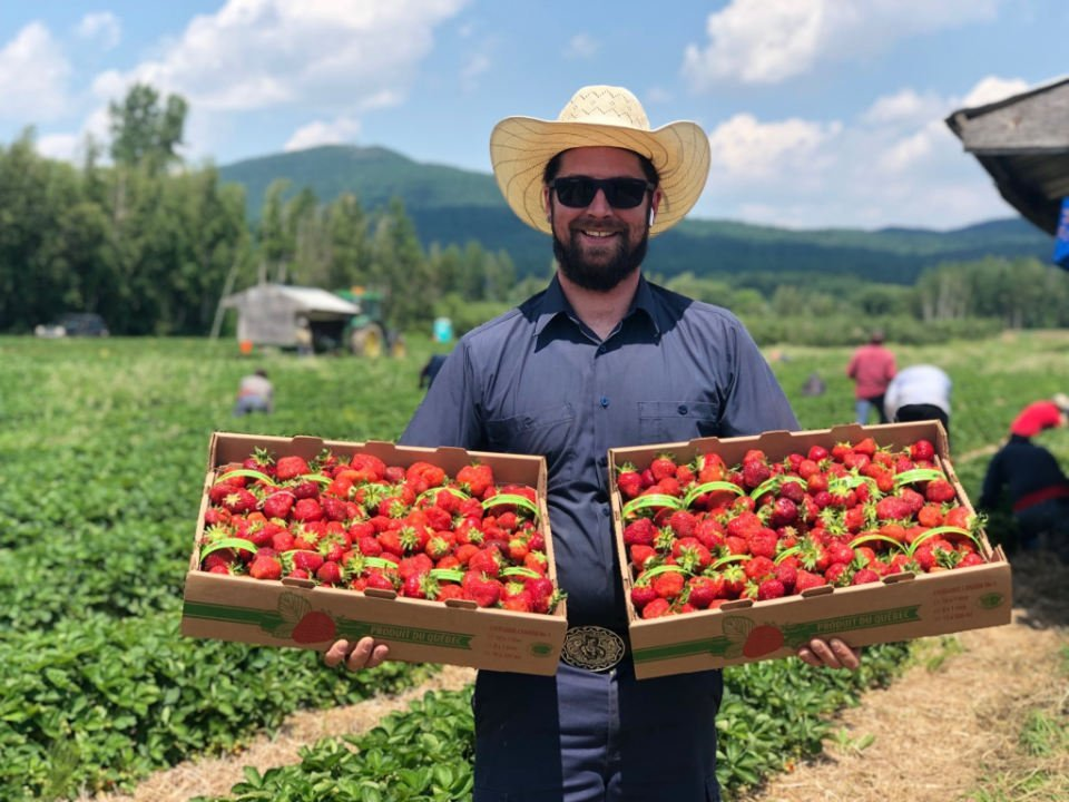 produce picking man holding 2 baskets of strawberries in the field with people picking fruits le potager mont-rouge halte gourmande rougemont quebec canada ulocal local products local purchase local produce locavore tourist