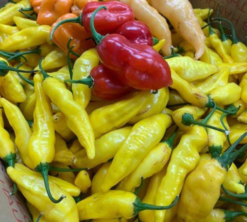 Piments poivrons boutique d'aliment peppermaster Rigaud Québec Ulocal produit local achat local