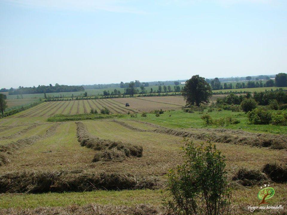 autocueillette vue des champs biologiques verger aux hirondelles lacolle québec canada ulocal produits locaux achat local produits du terroir locavore touriste