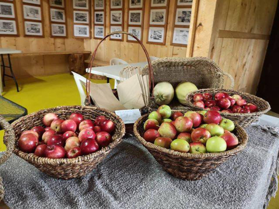 produce picking 3 baskets full of apples on a table with a wall lined with framed photos verger de l'île nepawa sainte-hélène-de-mancebourg quebec canada ulocal local products local purchase local produce locavore tourist