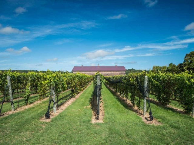 Vignoble vignoble Channing Daughters Winery Bridgehampton New York États-Unis Ulocal produit local achat local