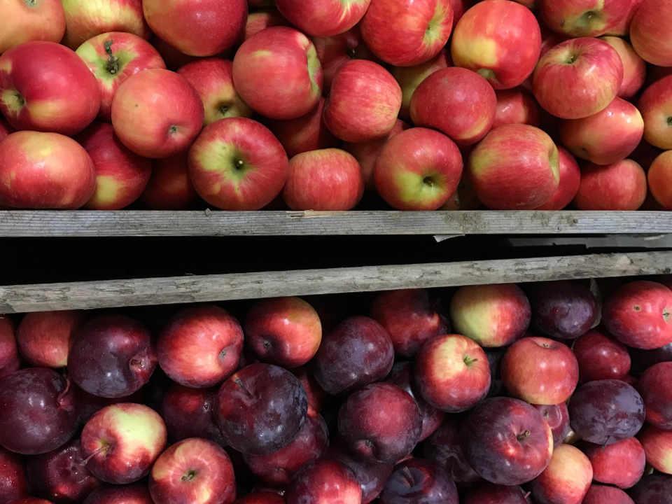 Autocueillette fraises pommes fruits et légumes La Ferme Quinn Notre-Dame-de-l'Ile-Perrot Ulocal produit local achat local produit du terroir