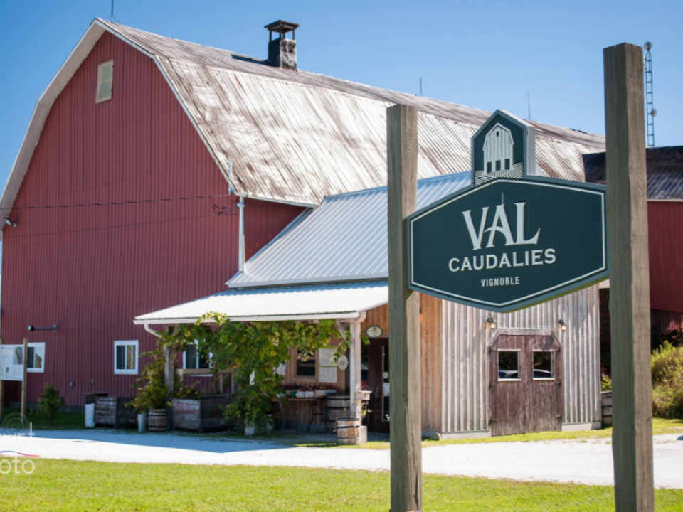 Vineyard cider wine Vineyard Val Caudalies Quebec ulocal local product local purchase