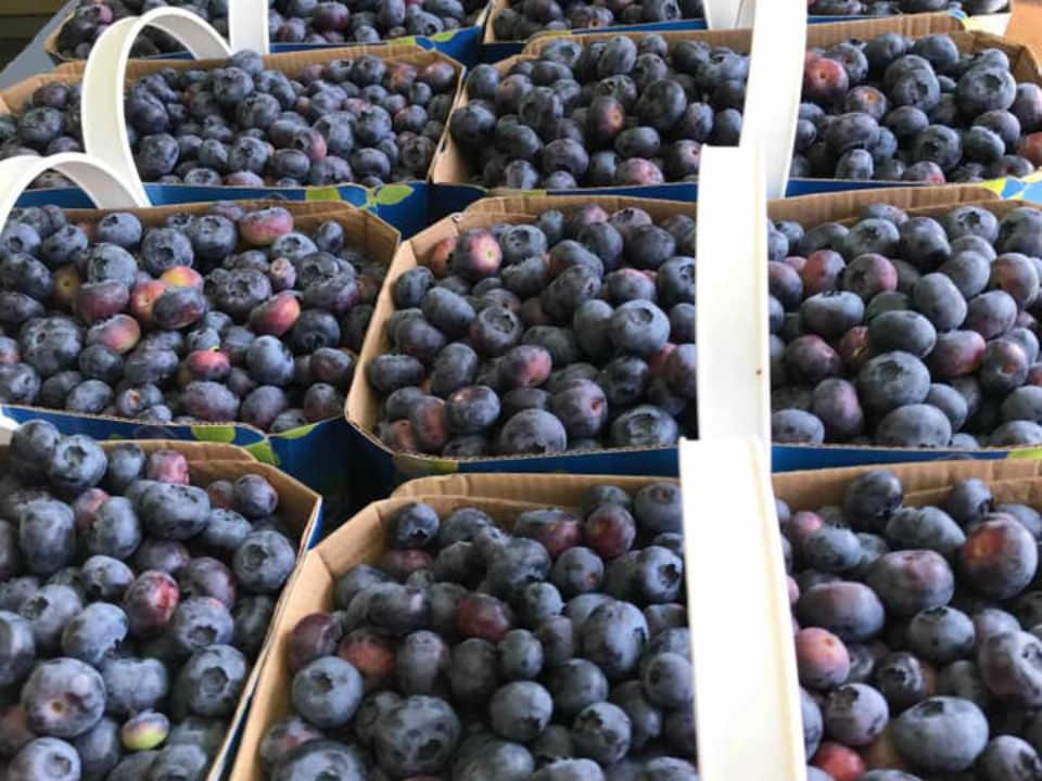 U-pick shop products home Bleuetière Planète Bleu Saint-Chrysostome Ulocal local product local purchase
