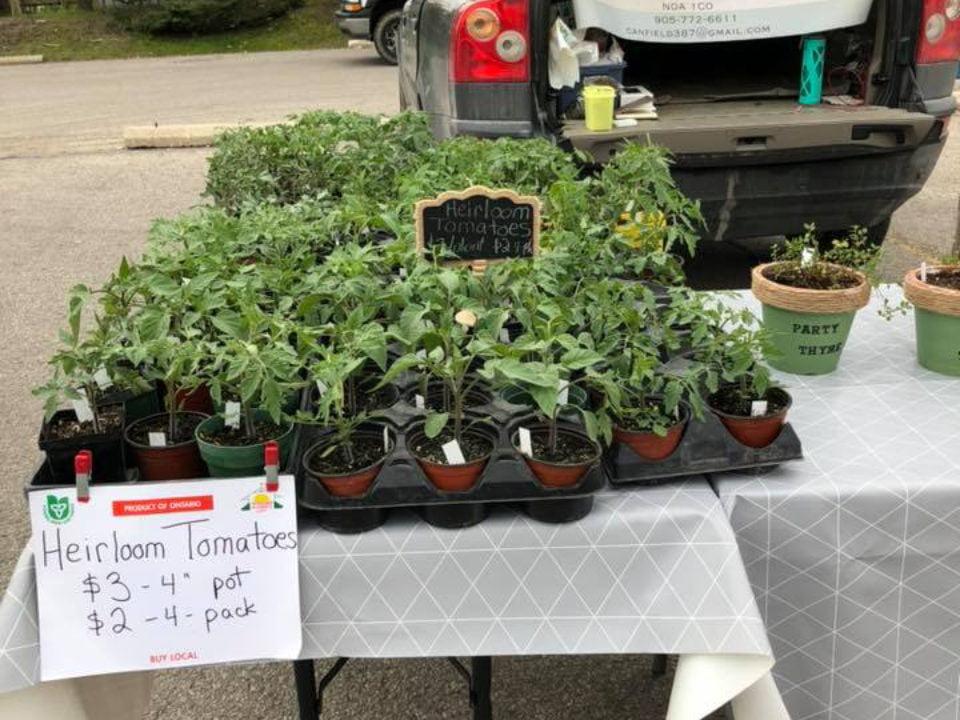 marché public kiosque extérieur de plants de tomates caledonia farmers market caledonia ontario canada ulocal produits locaux achat local produits du terroir locavore touriste