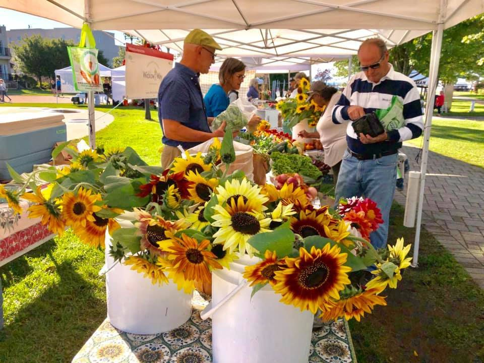 public markets table of plants and sunflower with other kiosk in the background and people on the site cobourg farmers market cobourg ontario canada ulocal local products local purchase local produce locavore tourist