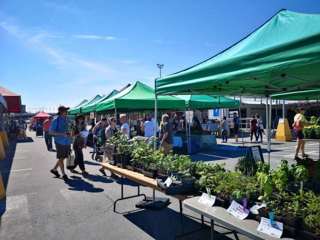 public markets sunny day at elgin street market with visitors on the site greater sudbury market sudbury ontario canada ulocal local products local purchase local produce locavore tourist