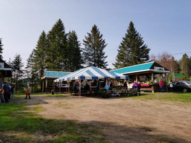public markets outdoor kiosks with customers on the site with big fir trees and a beautiful blue sky powassan farmers market powassan ontario canada ulocal local products local purchase local produce locavore tourist