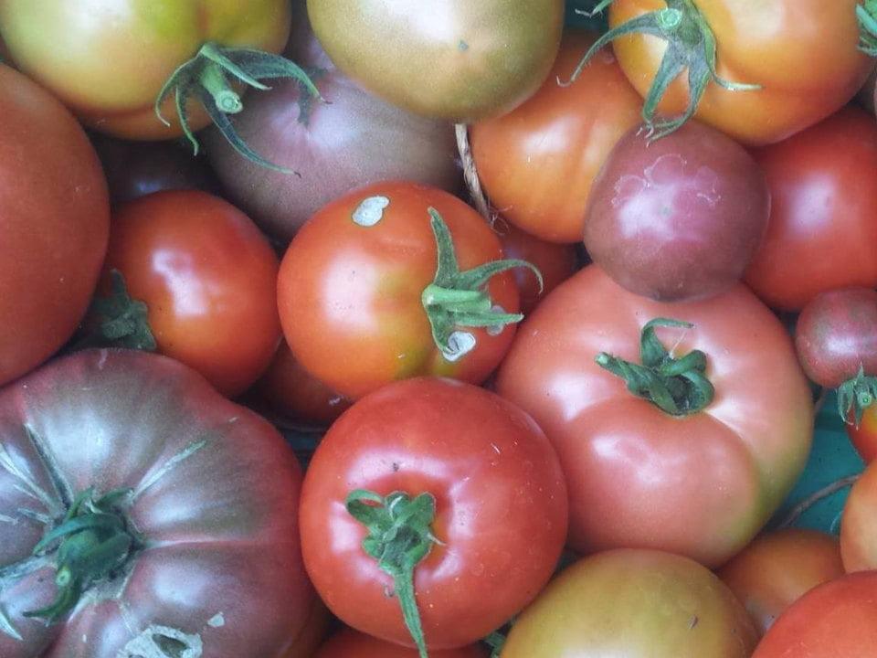 marché public tomates de différentes couleurs providence bay farmers market providence bay ontario canada ulocal produits locaux achat local produits du terroir locavore touriste