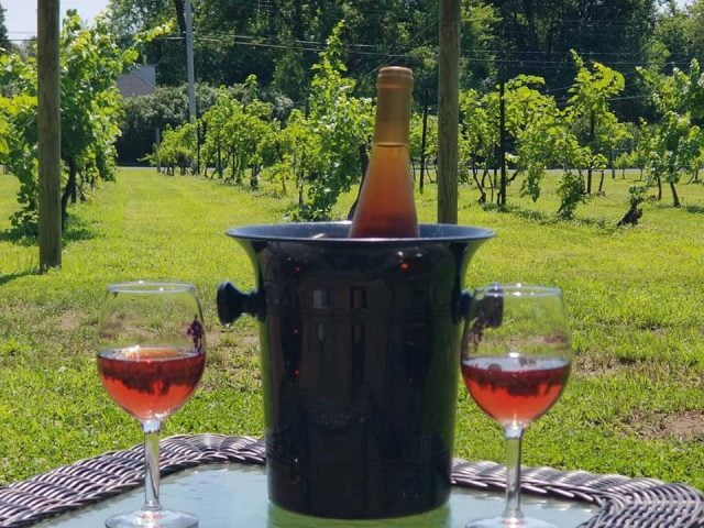 vineyard bottle of wine in an ice bucket and 2 glasses of rosé on a table overlooking the vineyards amalthea cellars farm winery atco new jersey united states ulocal local products local purchase local produce locavore tourist