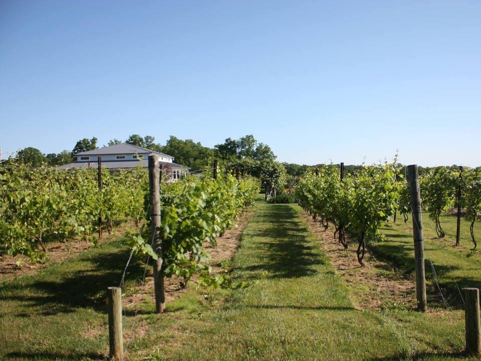 vignoble vue du vignoble en été anthony road wine company penn yan new york états unis ulocal produits locaux achat local produits du terroir locavore touriste
