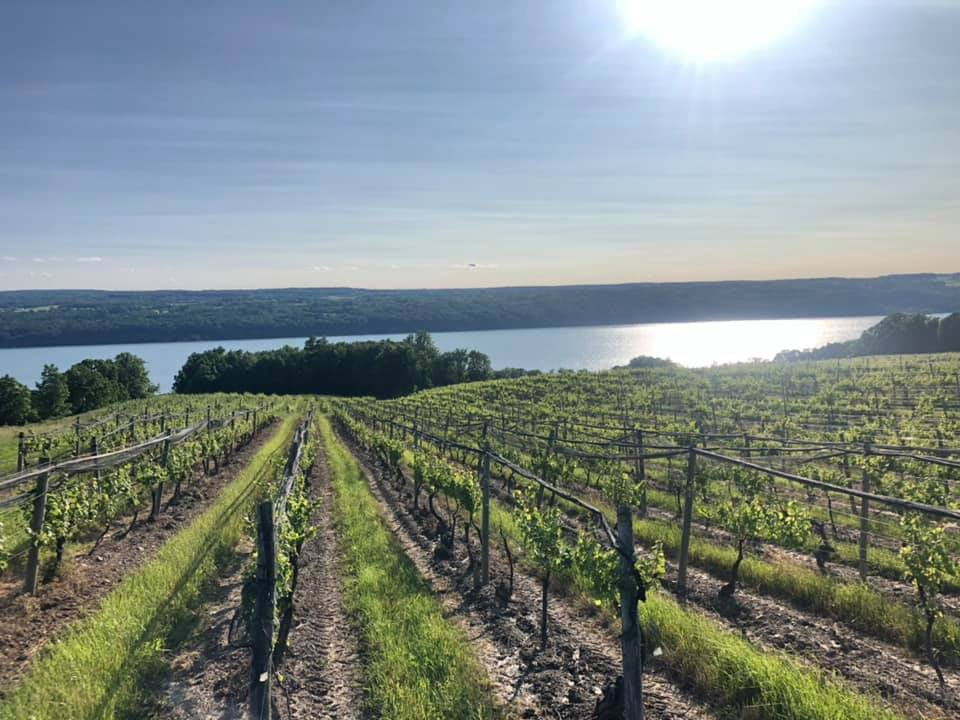 extraordinary view of the lake and vineyards