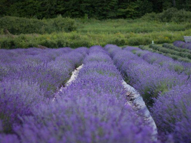 boutique lavender fields azulée baie-saint-paul quebec canada ulocal local products local purchase local produce locavore tourist