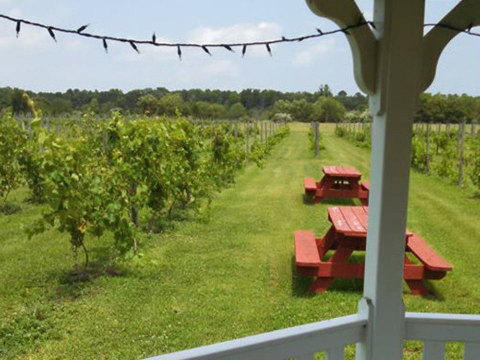 vineyard beautiful view from the porch of the vines with picnic tables balic winery mays landing new jersey united states ulocal local products local purchase local produce locavore tourist