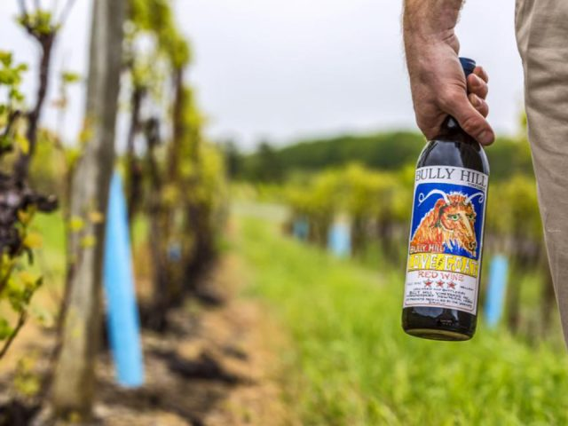 vineyard man in the vineyard with bottle of wine in his hand bully hill vineyards hammondsport new york united states ulocal local products local purchase local produce locavore tourist