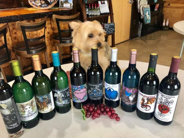 vineyards assortment of vineyard wine bottles with a small dog busted grapes winery black river new york united states ulocal local products local purchase local produce locavore tourist